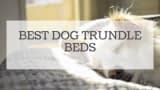 Best Dog Trundle Beds Reviewed